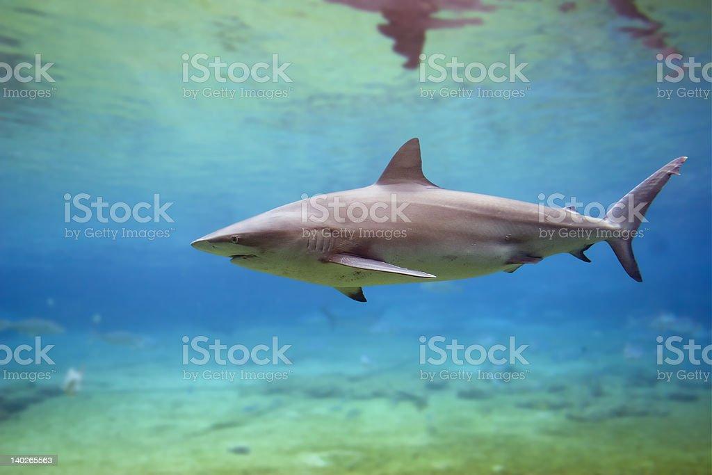 SharkA stock photo