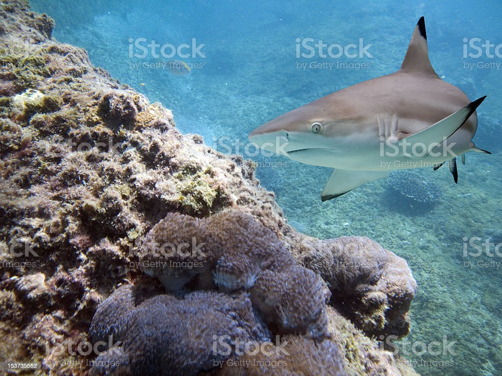 sharkb stock photo