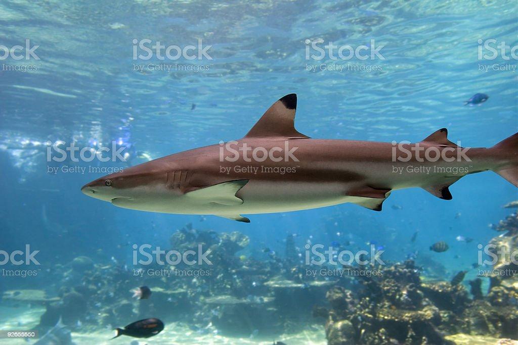 Sharkies stock photo