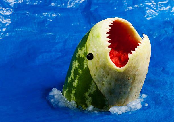 sharkmelon - melonen hai stock-fotos und bilder