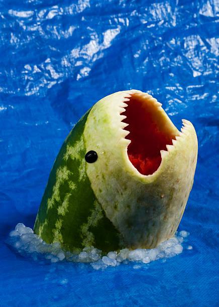 sharkmelon-wassermelonen shark - melonen hai stock-fotos und bilder