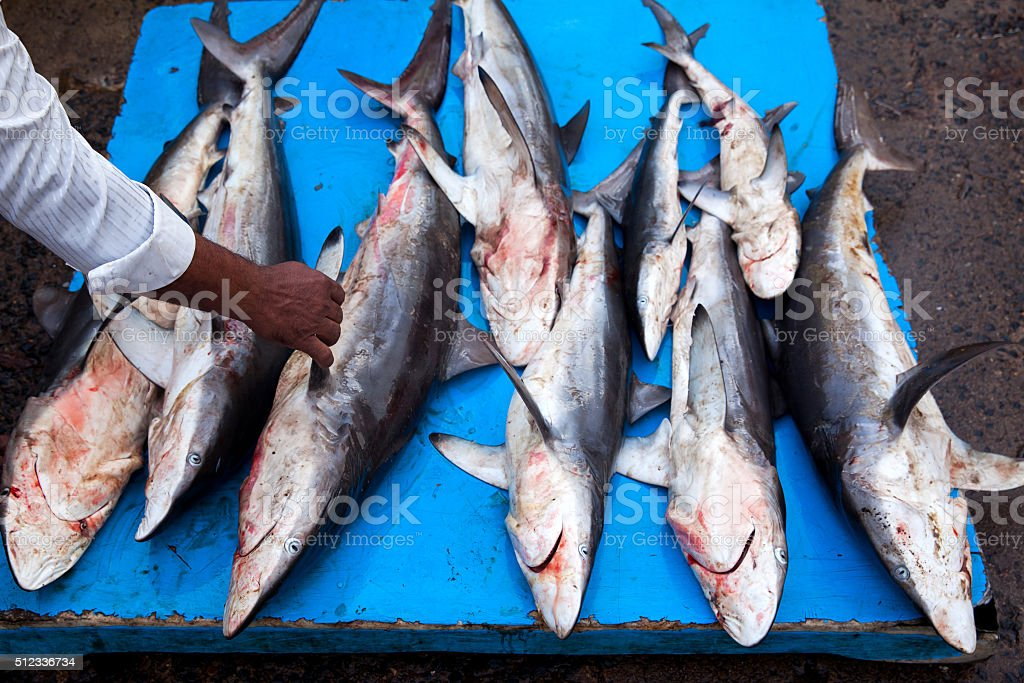 Sharks at fish market stock photo