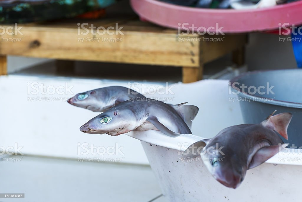 Sharks for sale in market royalty-free stock photo