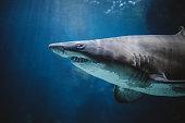 Dangerous looking sharks