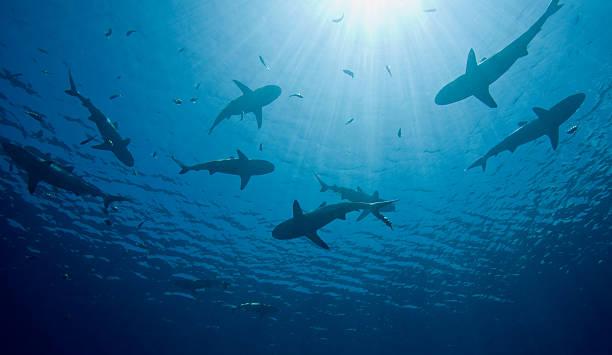 sharks - squalo foto e immagini stock