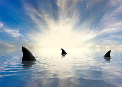 The Shark's fin above water. Close up.  Back Fin of great white shark, Carcharodon carcharias, False Bay, South Africa, Atlantic Ocean