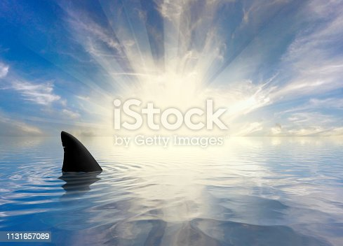 Shark Fins in the Ocean at Sunset