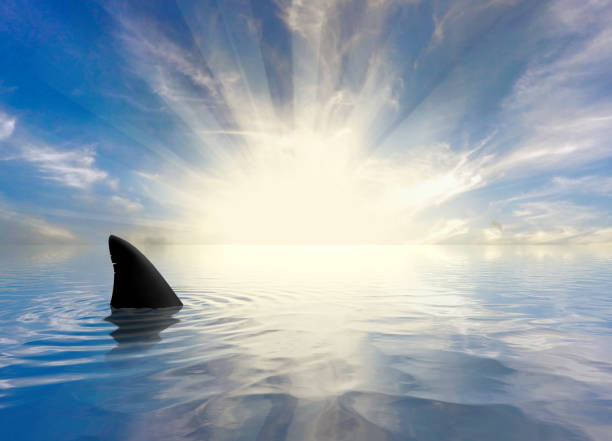 sharks swimming in the ocean - squalo foto e immagini stock