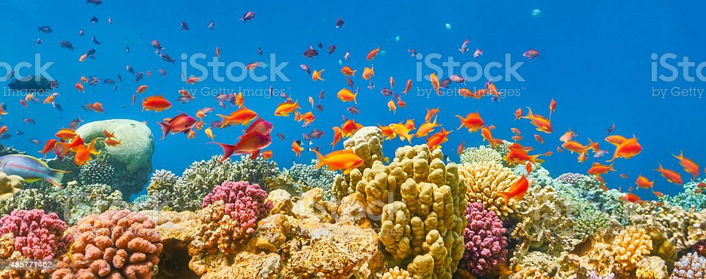 Sharm El Sheikh, Red Sea, Egypt stock photo