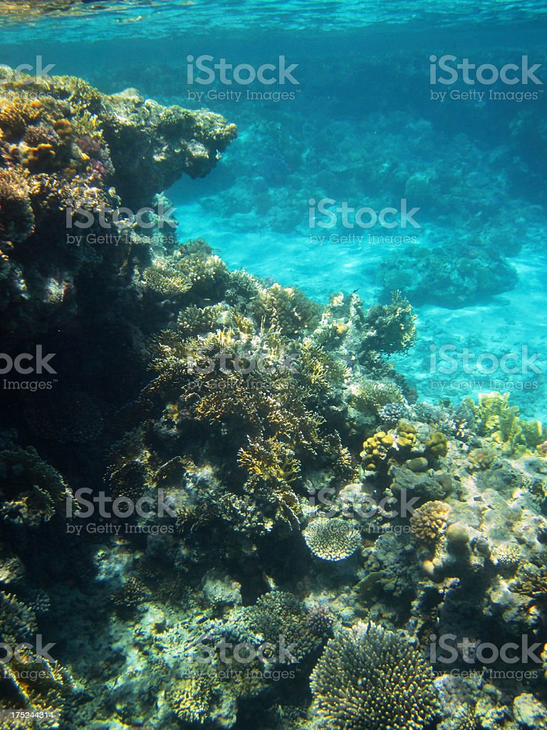 Sharm el Sheikh underwater royalty-free stock photo