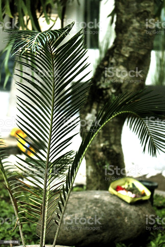 Sharp Leaf Plant With Balinese Spiritual Offering royalty-free stock photo