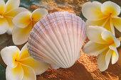 Sharp shell