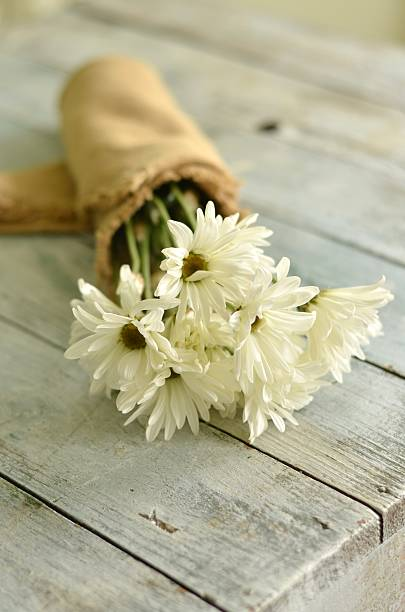 Shasta Daisy Bouquet, Still Life stock photo