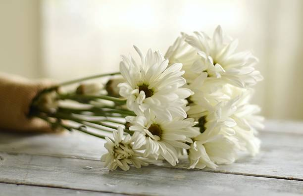 Shasta Daisy Bridal Bouquet stock photo