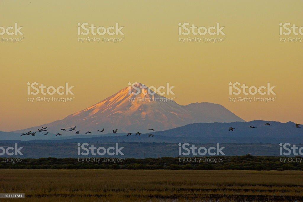 Shasta Sandhill Sunrise stock photo
