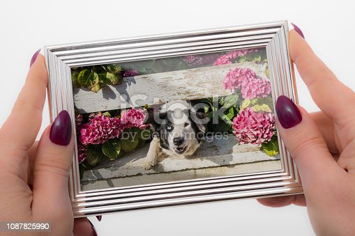 Personal Perspective mature woman with purple stiletto shaped nails remembering her childhood pet dog with different eyes