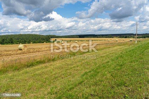 sheaf of straw in the field. village landscape