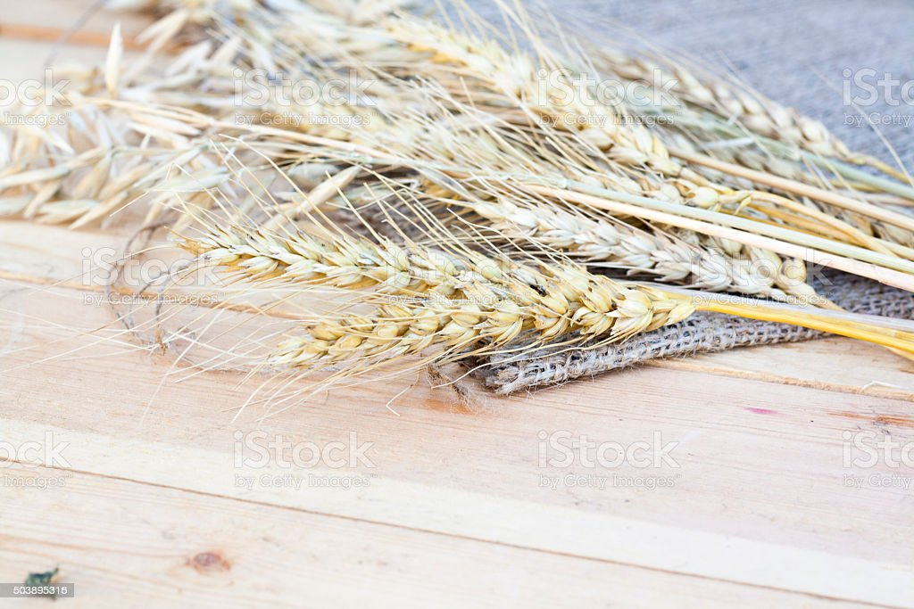 Sheaf of wheat and oat on wooden background royalty-free stock photo
