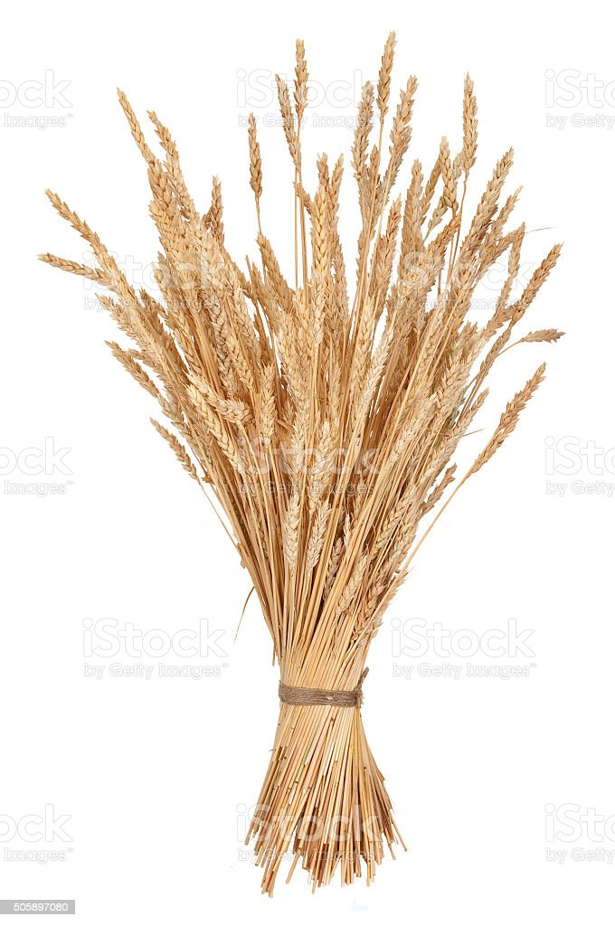 Sheaf of wheat stock photo