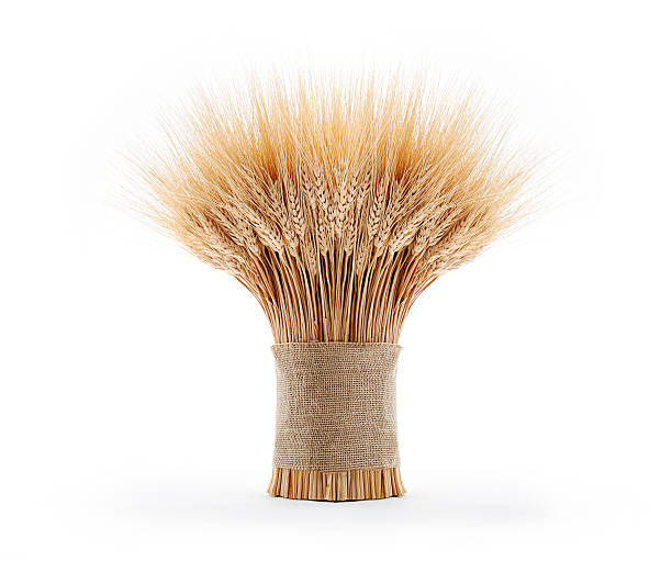 Gerbe de blé - Photo