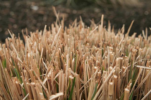 Sheared Grass stock photo