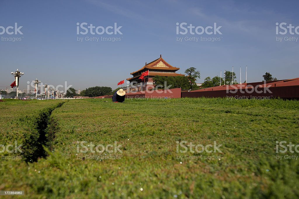 shearing a hedge royalty-free stock photo