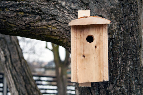 Shed for birds on trees. Wooden birdhouse on the tree. – zdjęcie