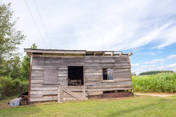 Shed in a corn field A beautiful old storage shed for farm tools and equipment by a corn field in rural, upstate South Carolina. apostatize stock pictures, royalty-free photos & images