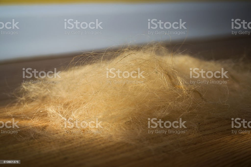 Shedding Dog Fur Stock Photo More Pictures Of Animal Hair Istock