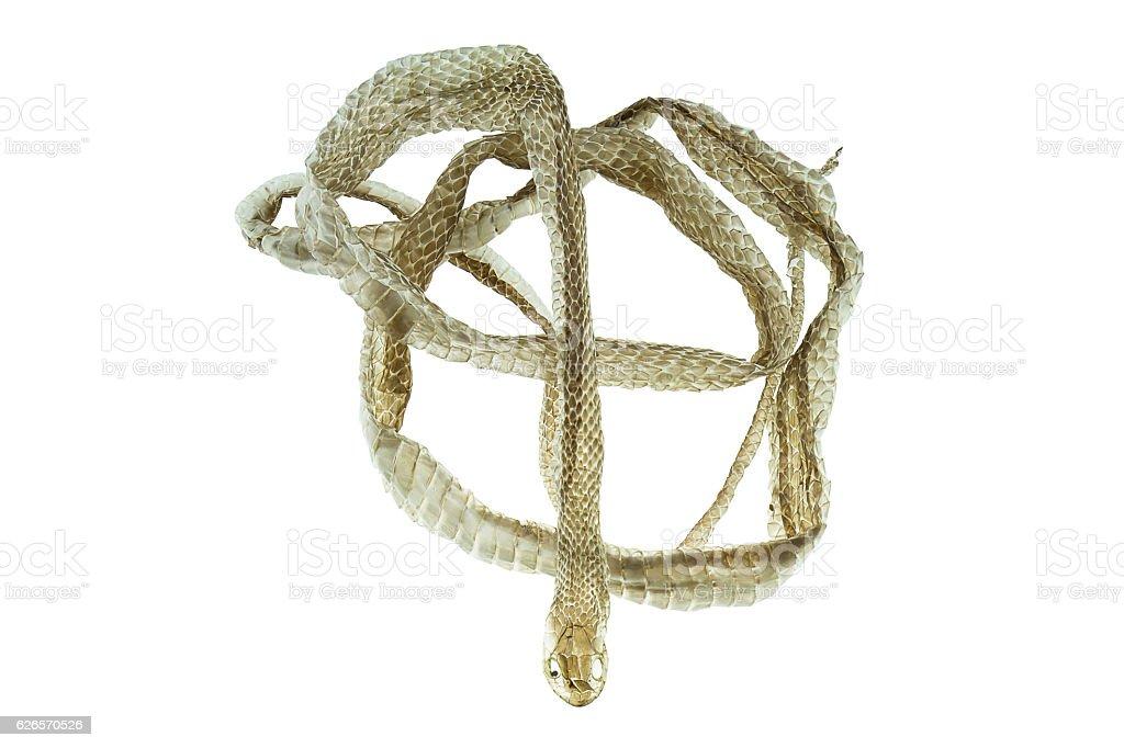Shedding snake skin on white background stock photo