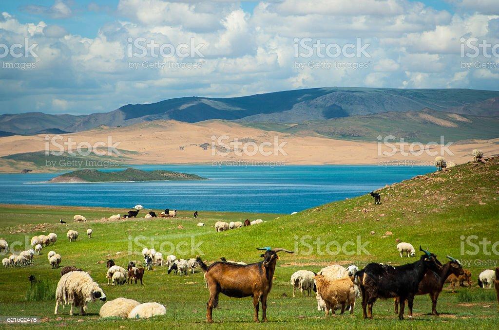 Schafe und Ziegen Lizenzfreies stock-foto