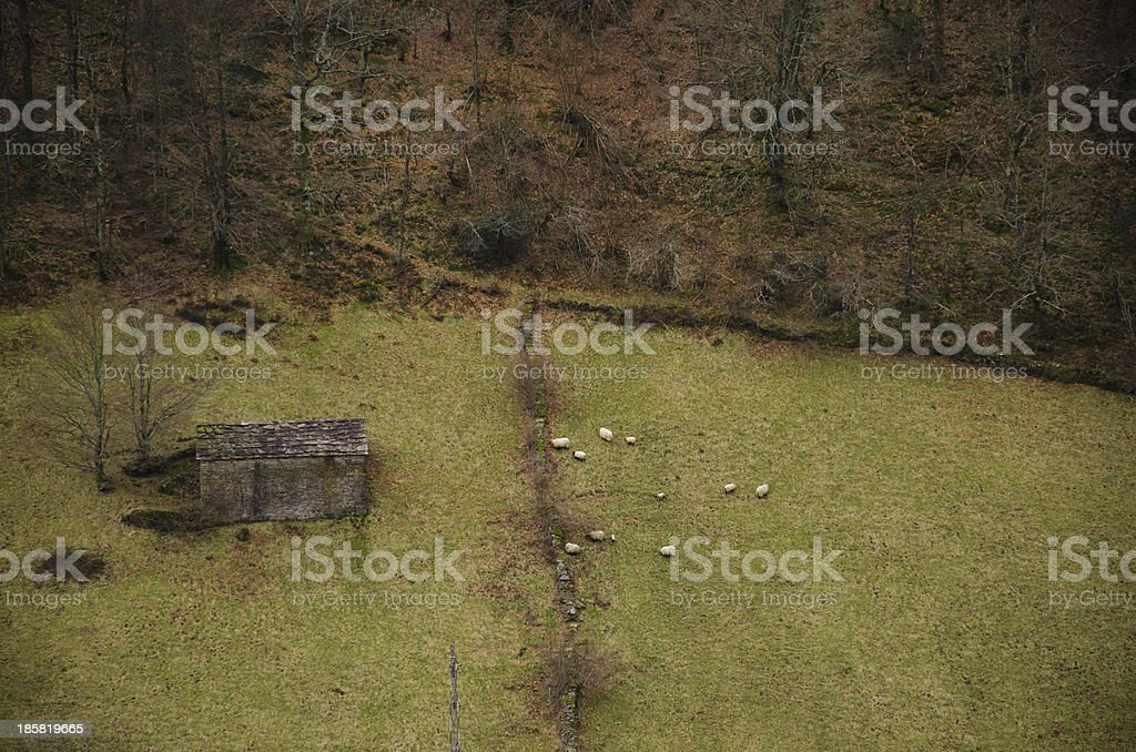 Sheep and house. royalty-free stock photo