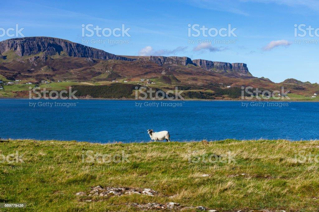 A sheep at Staffin Bay, Isle of Skye stock photo