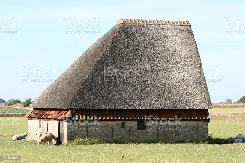 Sheep barn stock photo