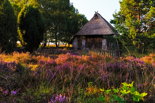 Sheep cottage in the Luneburg heath