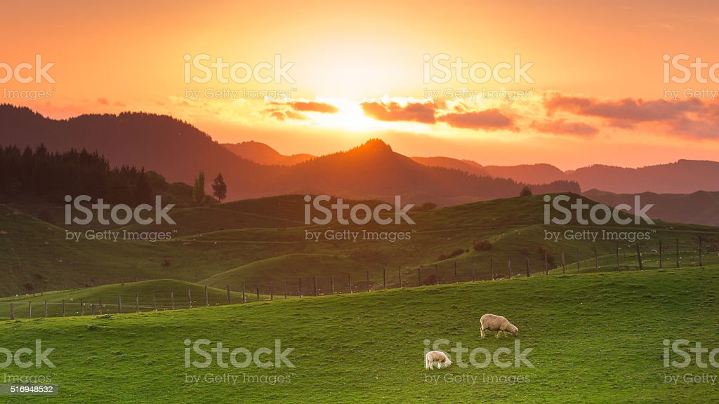 Sheep Farm stock photo