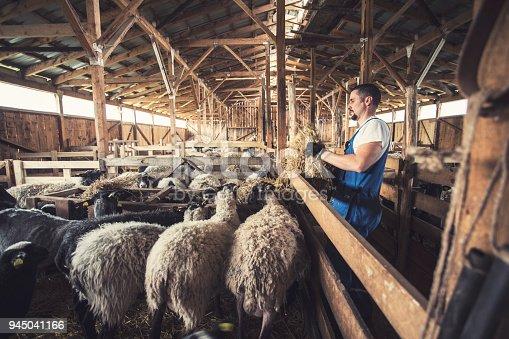 Farmer In His Sheep farm