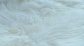 Sheep feather white fur background