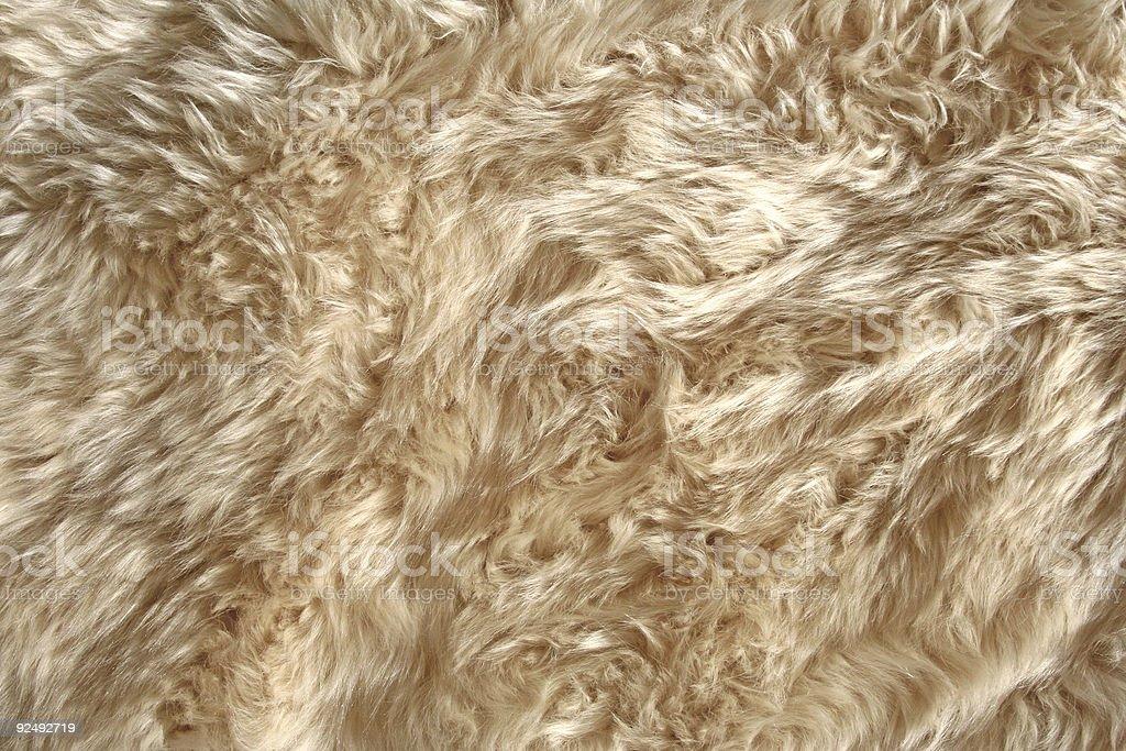 Sheep Fur Texture 1 royalty-free stock photo