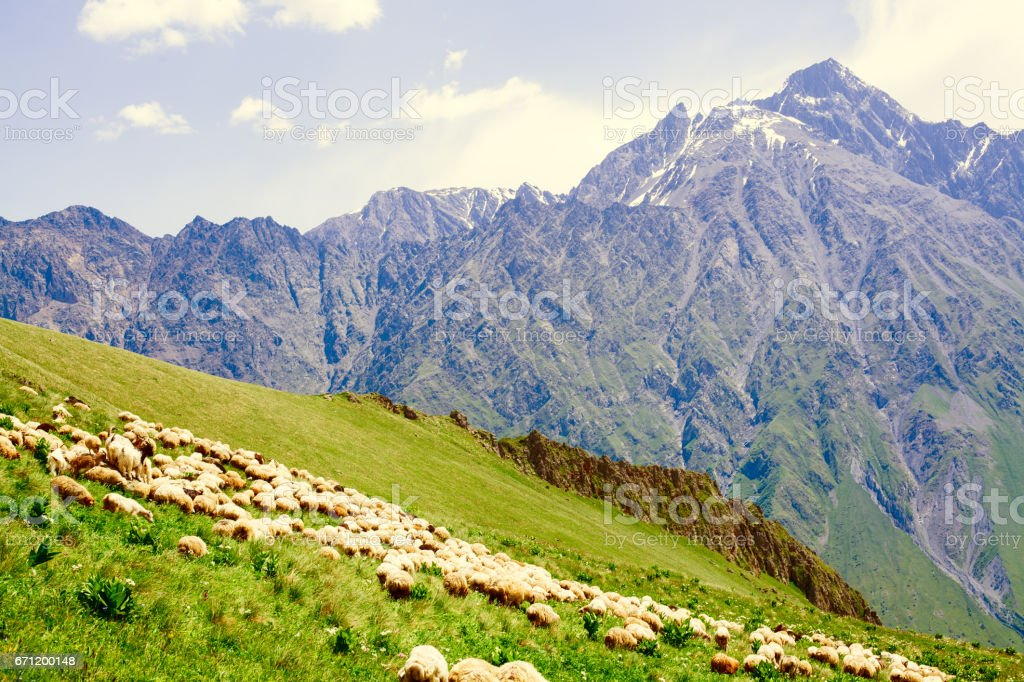 Sheep graze on the slopes of steep mountains stock photo