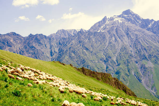 Sheep graze on the slopes of steep mountains stock photo