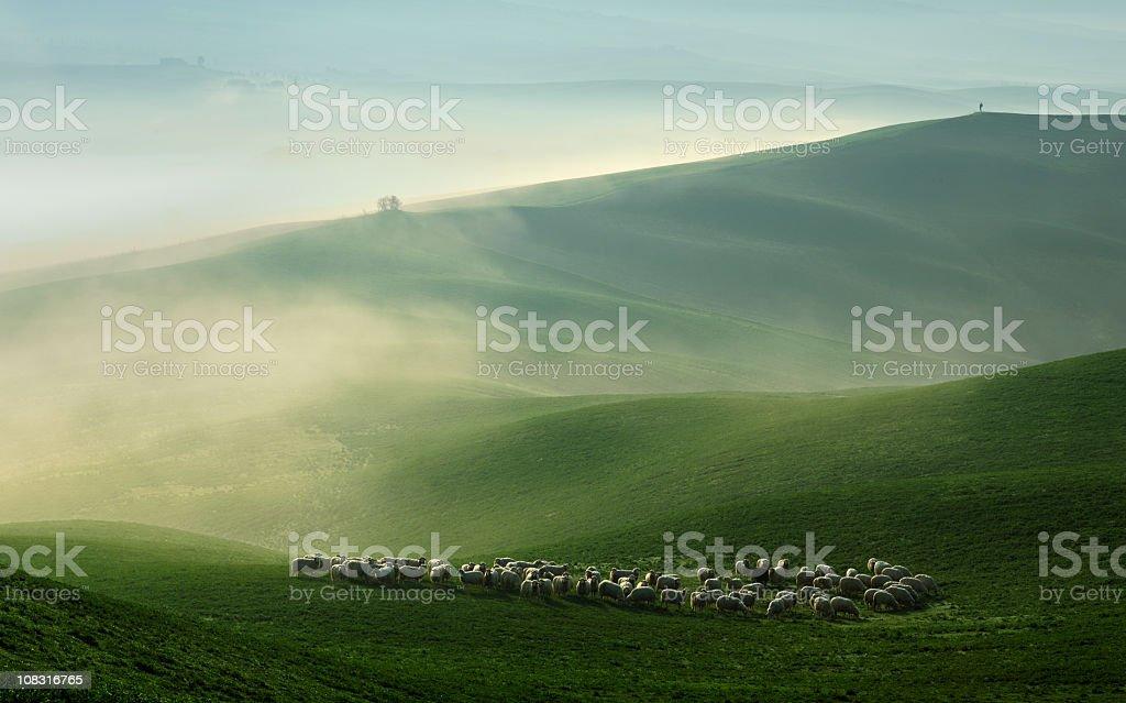Schafe grasen in Foggy Rolling Toskana Landschaft in der Abenddämmerung – Foto
