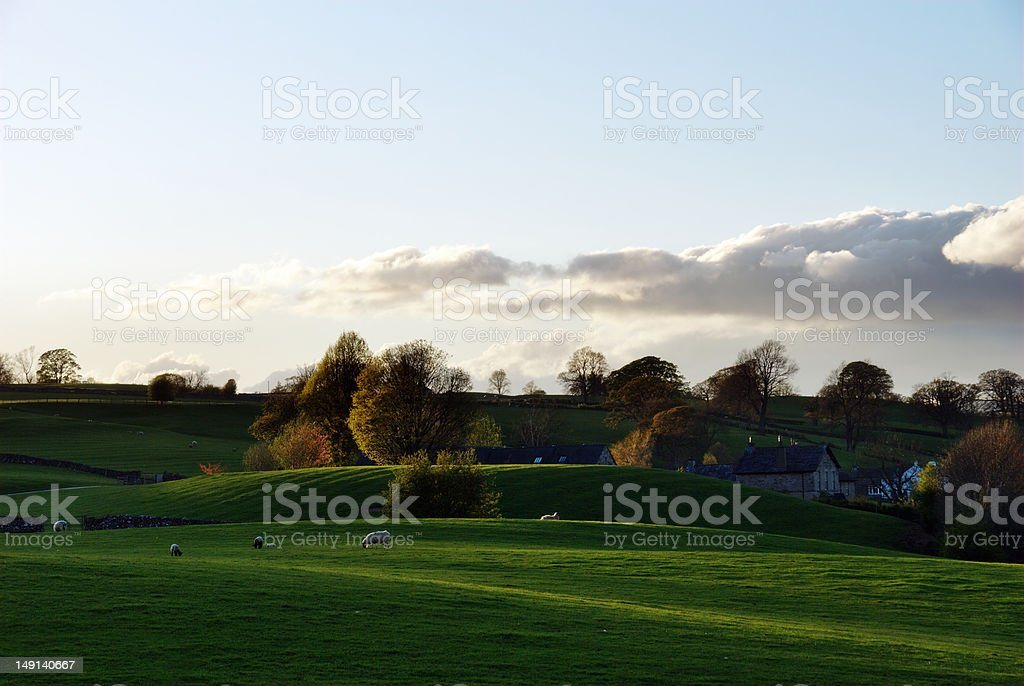 Sheep grazing near a farmhouse royalty-free stock photo