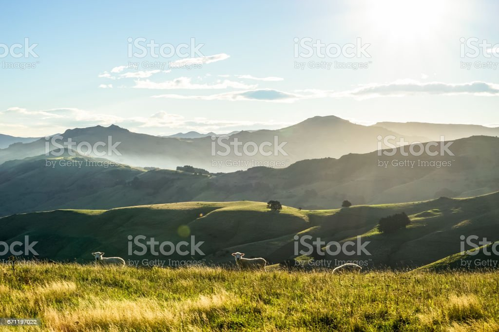 Cows on Mountain Farmland Digital Download Nature Landscape Photography Printable Wall Art South Island New Zealand Wilderness Scene