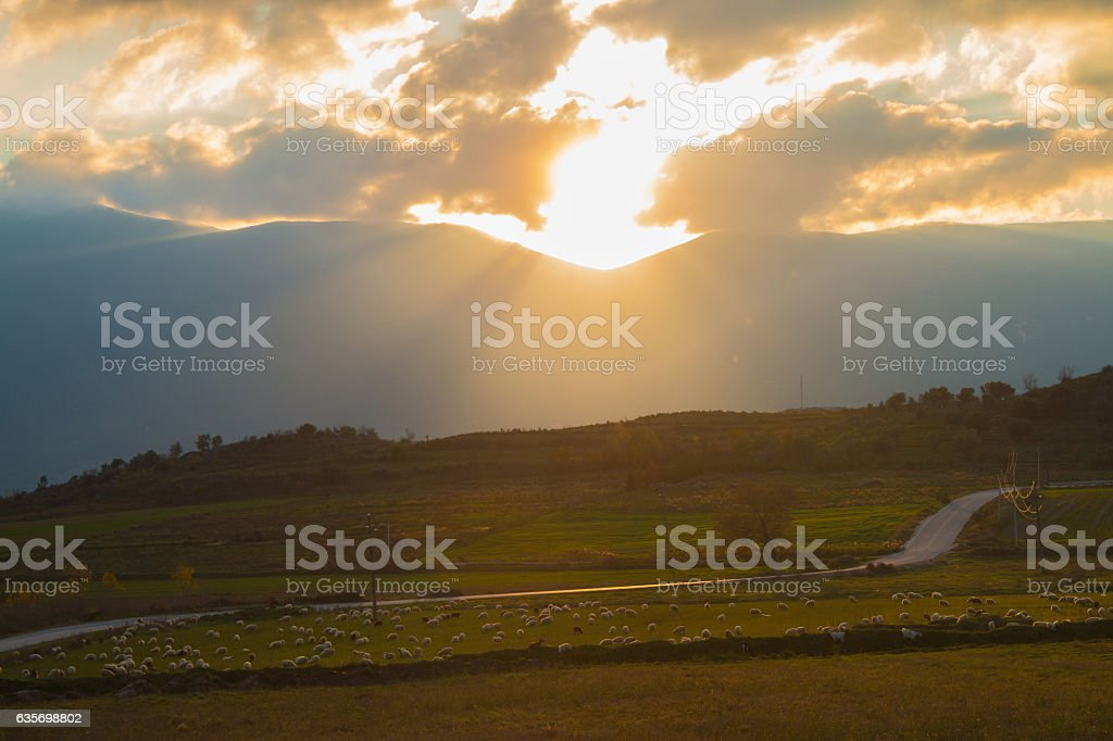 Sheep In The Pasture at sunset light, countryside rural landscape stock photo