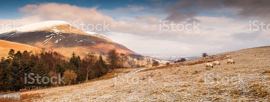 Sheep in the snow on Latrigg mountain stock photo