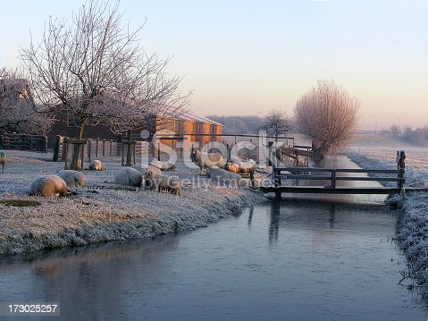 istock sheep in winter 173025257