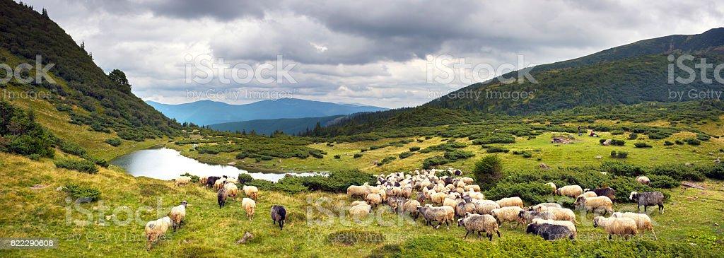 Sheep Lake in the Carpathians Vorozheska stock photo