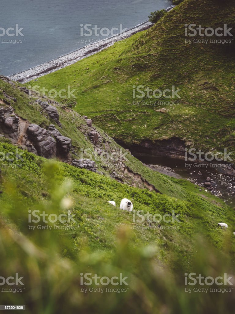 A sheep looks up from the hillside it's grazing on, just downhill from Lealt Falls, Isle of Skye, Scotland stock photo