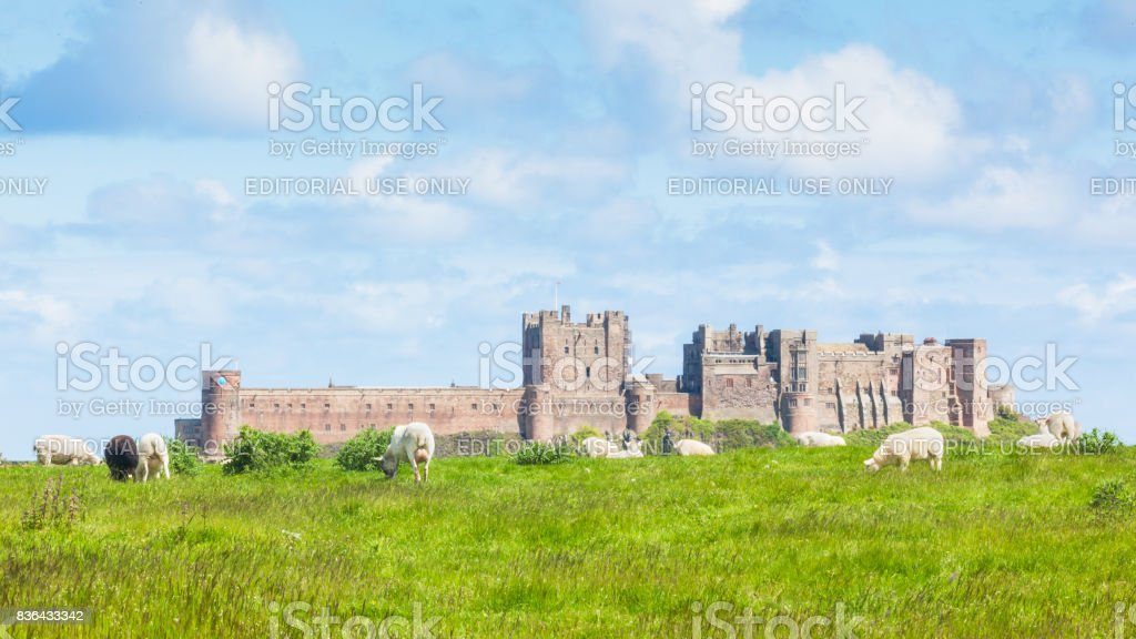 Sheep Near Bamburgh Castle stock photo